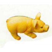 kleines Schweinchen