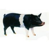 schwarzes stehendes Schwein