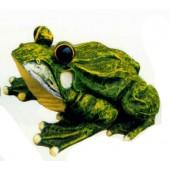 Frosch mit großen Glubschaugen