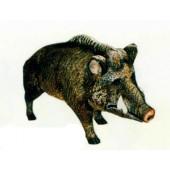 Wildschwein Keiler stehend