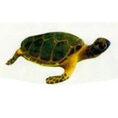 große Wasserschildkröte