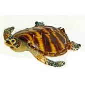 große schwimmende Wasserschildkröte