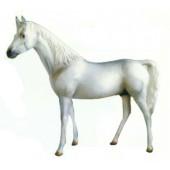 schneeweißes Pferd
