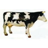 große schwarz weiß Kuh gefleckt