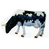 grasende schwarz weiße Kuh