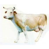 hübsche weiß beige Kuh