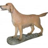 Hund, irischer Setter
