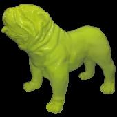 Hund, Bulldogge fluoreszierend
