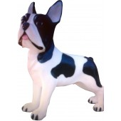 Hund französische Bulldogge