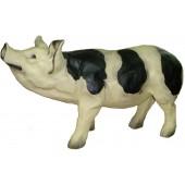 Schwein gefleckt