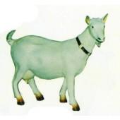 weiße Ziege