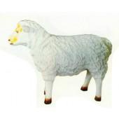 kleines Schaf Kopf schräg