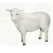 weißes Schaf mit schrägem Kopf