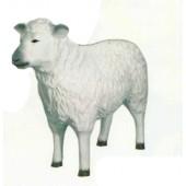 kleines weißes Schaf