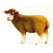 braunes Wollschaf