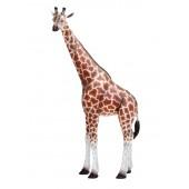 BabyGiraffe stehend