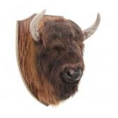 Brauner Büffelkopf auf Holz