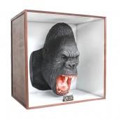 Gorillakopf in Schaukasten