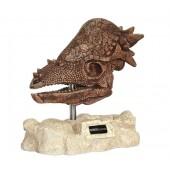 Dinosaurier Pachycephalosaurus auf Stein