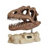 Dinosaurier Allosaurus auf Stein