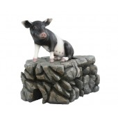 Schwein schwarzweiß sitzend