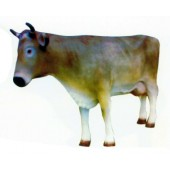 große braun weiße Kuh mit Hörnern