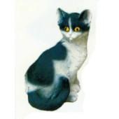 schwarz weißes Kätzchen sitzend