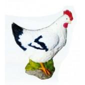 weiße Henne mit schwarzem Schwanz