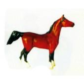 kleines Pferd braun schwarz Kopf oben