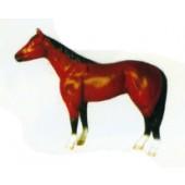 braune schwarzes kleines Pferd Kopf oben