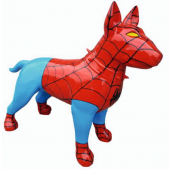Hund Bullterrier Spiderman Kampfhund
