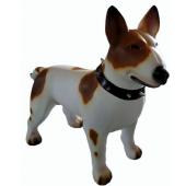 Hund Bullterrier Kampfhund