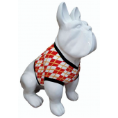 Hund französische Bulldogge weiß mit T-Shirt