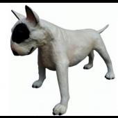 Bullterrier Kampfhund weiß schwarz