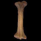 Dinoknochen mittel