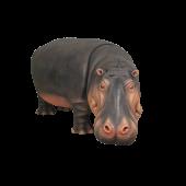 Nilpferd Kopf unten