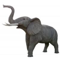 Elefant Rüssel oben