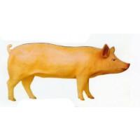 stehendes Schwein