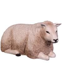 Wollschaf liegend