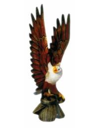 Amerikanischer Weißkopfseeadler Flügel oben