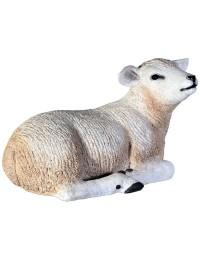 Lamm Wollschaf liegend