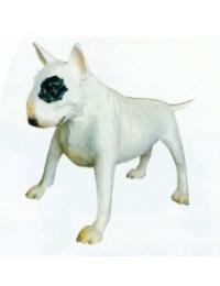 weißer Biullterier Kampfhund groß mit schwarzem Fleck