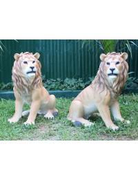 Löwen sitzend Blick recht und links