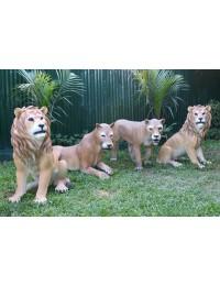 Löwen und Löwinnen