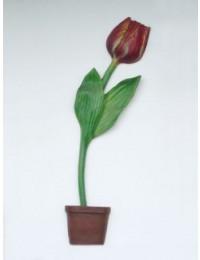 Halbe Tulpe mit dunkelroter Blüte