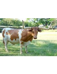 Texanisches Langhorn Rind