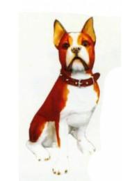 Boston Terrier sitzend braun weiß