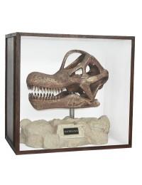 Dinosaurier Fossil Brachiosaurus auf Ständer in Schaukasten