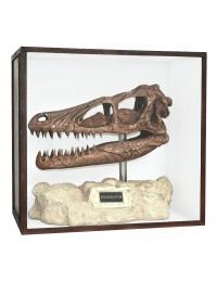 Dinosaurier Fossil Velociraptor auf Ständer in Schaukasten