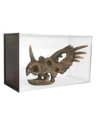 Dinosaurier Fossil Styracosaurus in Schaukasten